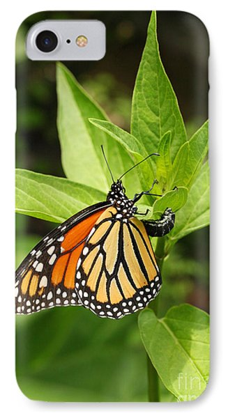 IPhone Case featuring the photograph Monarch Egg Time by Steve Augustin