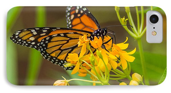 IPhone Case featuring the photograph Monarch by Jane Luxton