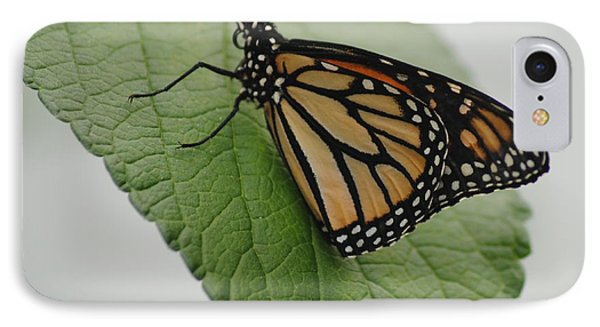 Monarch On Green IPhone Case