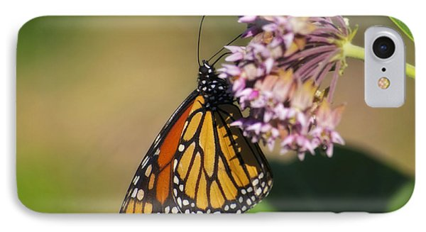 Monarch On Milkweed IPhone Case by Shelly Gunderson