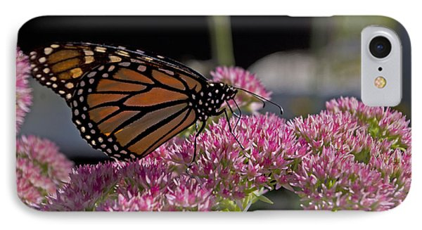 Monarch On Sedum IPhone Case by Shelly Gunderson