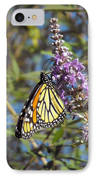 Monarch On Vitex IPhone Case by Jayne Wilson