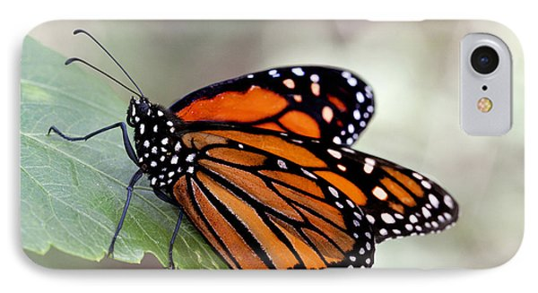 Monarch Resting On A Leaf IPhone Case by Ruth Jolly