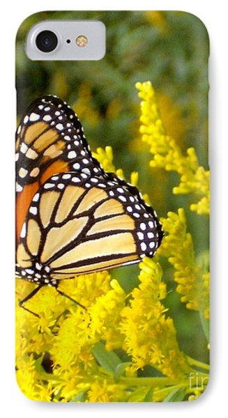 IPhone Case featuring the photograph Monarch by Sara  Raber