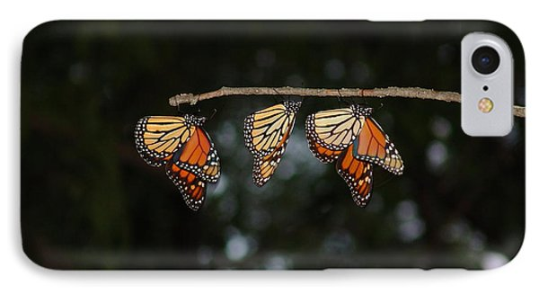 Monarch Trio IPhone Case by Shelly Gunderson