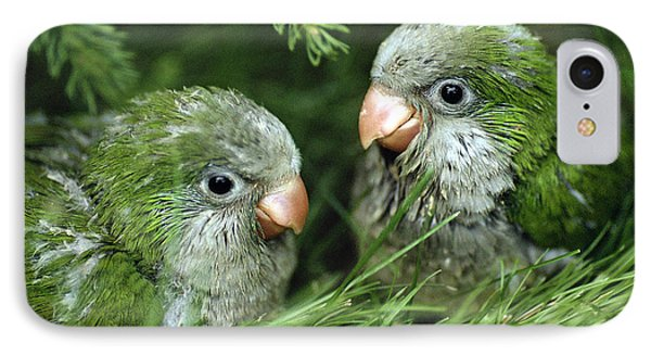 Monk Parakeet Chicks IPhone Case by Paul J. Fusco