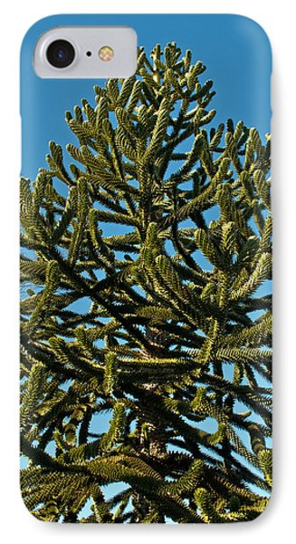 Monkey Puzzle Tree E IPhone Case by Tikvah's Hope