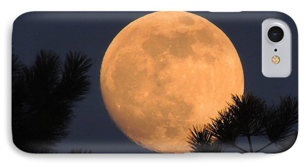 IPhone Case featuring the photograph Moon Pines by Charlotte Schafer