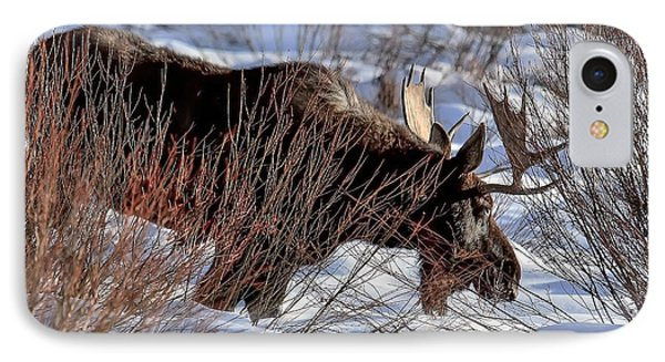 IPhone Case featuring the photograph Moose At Sunset In Winter by Yeates Photography