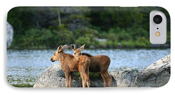 Moose Calves In Maine IPhone Case