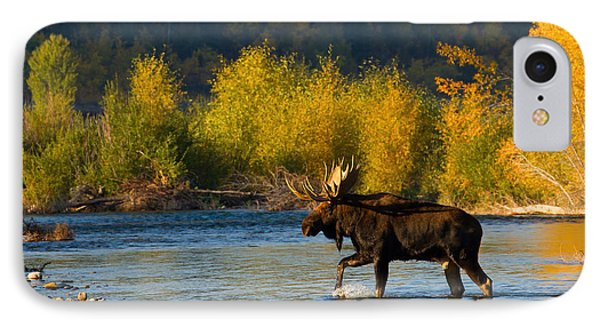 IPhone Case featuring the photograph Moose Crossing by Aaron Whittemore