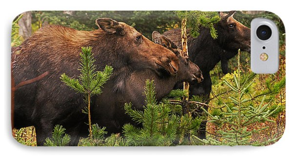 Moose Family At The Shredded Pine IPhone Case by Stanza Widen