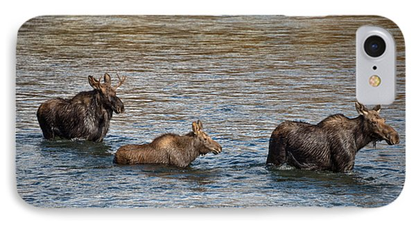 Moose Family IPhone Case by Leland D Howard