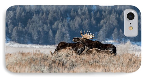 IPhone Case featuring the photograph Moose Family Pride by Yeates Photography