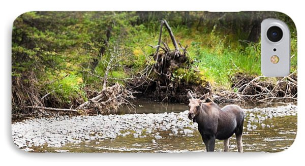 IPhone Case featuring the photograph Moose In Yellowstone National Park   by Lars Lentz