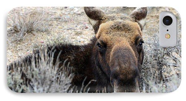 Moose Mugshot IPhone Case by Eric Nielsen