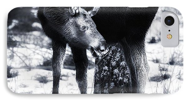 IPhone Case featuring the photograph Moose by Rose-Maries Pictures