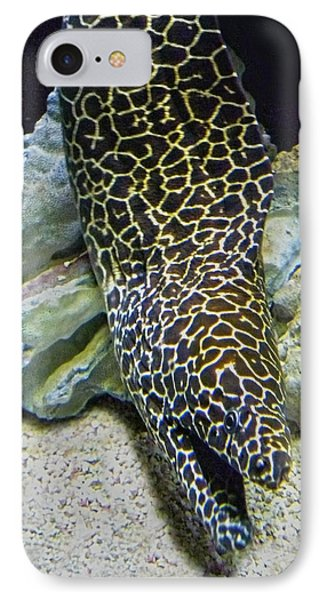 Moray Eel Phone Case by Sandi OReilly