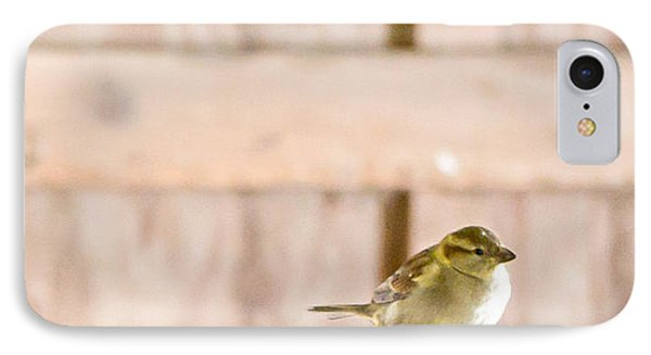 IPhone Case featuring the photograph Morning Bird by Courtney Webster