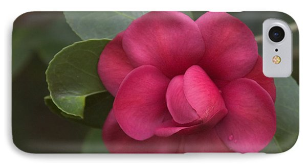 Morning Camellia IPhone Case by Penny Lisowski