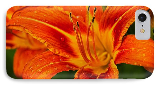 IPhone Case featuring the photograph Morning Dew by Dave Files