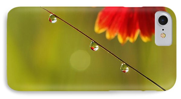 Morning Dew IPhone Case by Patrick Shupert