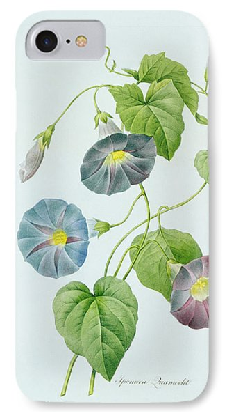 Morning Glory IPhone Case by Pierre Joseph Redoute