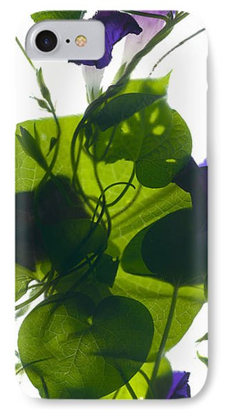 Morning Glory Rising IPhone Case by Julia McLemore