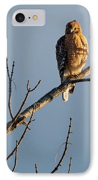 Morning Hawk IPhone Case by Bill Wakeley