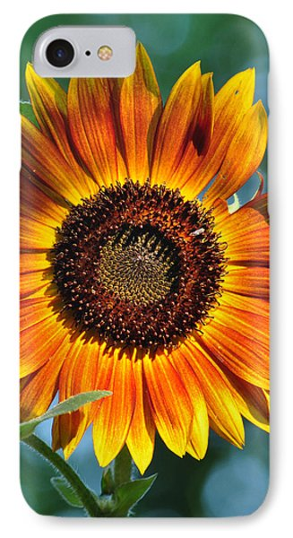 Morning Sun IPhone Case by Gail Butler