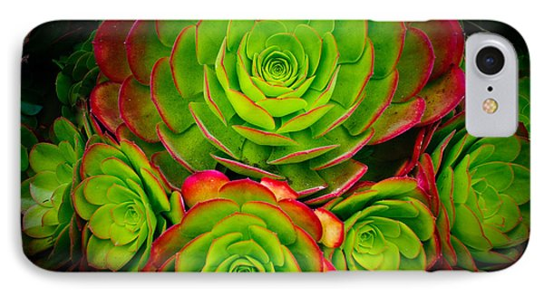 Morro Bay Echeveria IPhone Case by Terry Garvin
