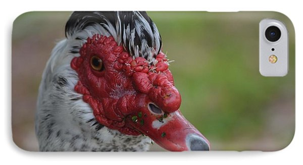 Moscovy Duck With Hairdo Phone Case by Jeff at JSJ Photography