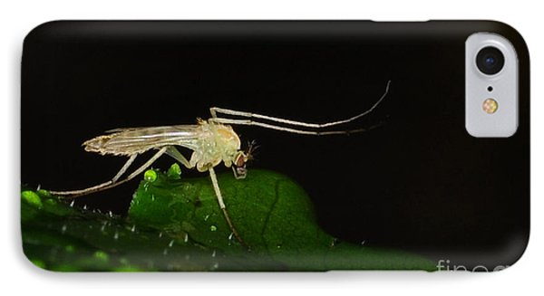 Mosquito Phone Case by Paul Ward