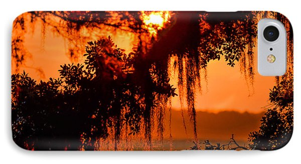 Moss Meets Sun  IPhone Case by Mary Ward