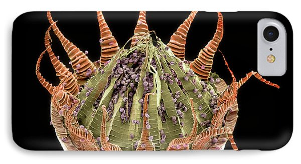 Moss Spore Capsule IPhone Case by Natural History Museum, London