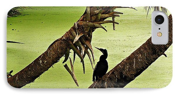 Mossy Wetland With Anhinga IPhone Case