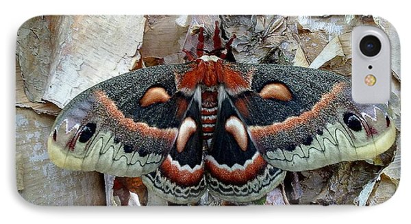 Moth On Paper Birch IPhone Case
