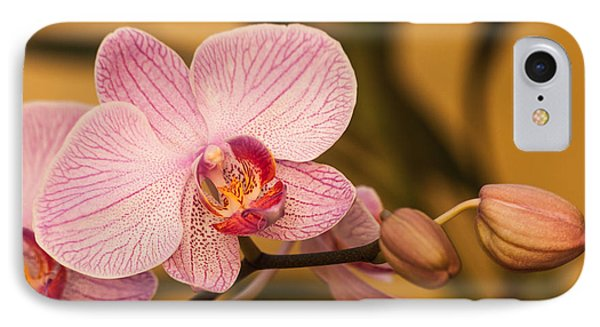 Moth Orchid IPhone Case by Ed Gleichman