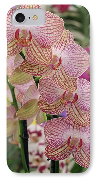 Moth Orchid (phalaenopsis) IPhone Case by Neil Joy