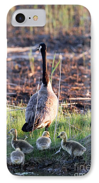 Mother Goose And Goslings IPhone Case by Martha Marks