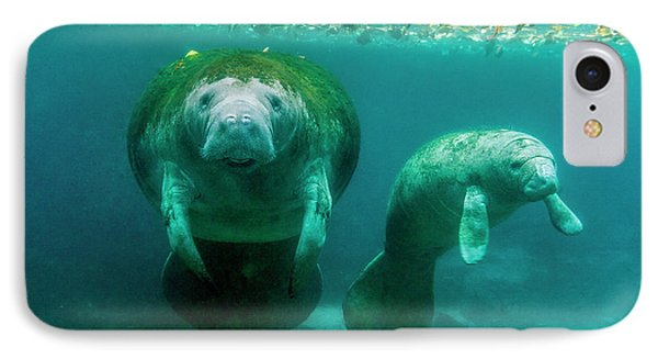 Mother Manatee With Her Calf In Crystal IPhone Case by James White