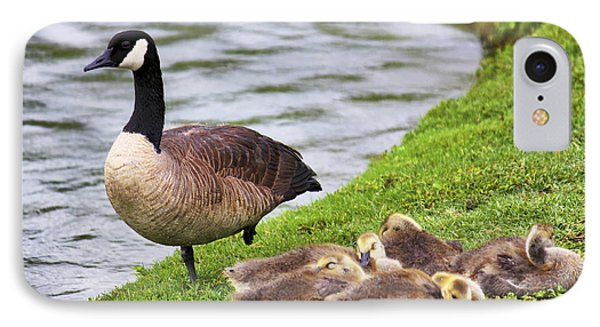 Mother With Goslings Phone Case by Jason Politte