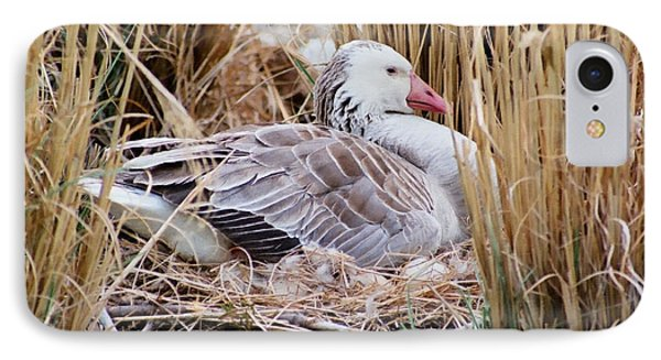 IPhone Case featuring the photograph Mother's Day Goose by Anita Oakley