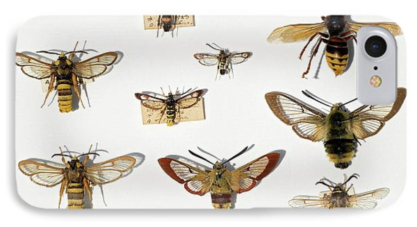 Moths And Batesian Mimicry IPhone Case