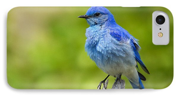 Mountain Bluebird IPhone Case by Aaron Whittemore