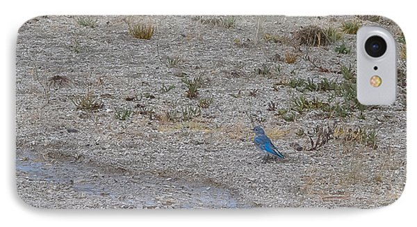 Mountain Bluebird  IPhone Case by Lars Lentz