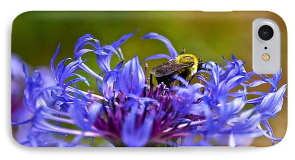 Mountain Cornflower And Bumble Bee IPhone Case by Byron Varvarigos