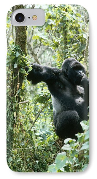 Mountain Gorilla IPhone 7 Case by Tierbild Okapia