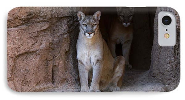 IPhone Case featuring the photograph Mountain Lion 1 by Arterra Picture Library