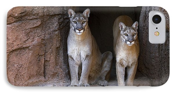IPhone Case featuring the photograph Mountain Lion 2 by Arterra Picture Library